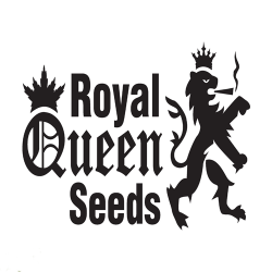 Buy Royal Queen cannabis seeds online UK