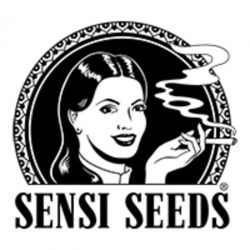 Buy Sensi Seeds Cannabis Seeds Online UK