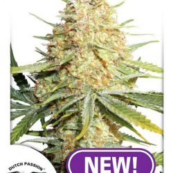 Lemon Zkittle Cannabis Seeds