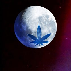Blue Moon Hemp